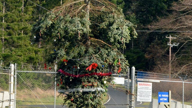 In this photo taken on Wednesday, Dec. 17, 2014, the top 12 feet of a Douglas fir hangs from an unused utility line outside Naval Magazine Indian Island near Port Hadlock, Wash. The tree top, blown onto the wire during a windstorm last week, has been gradually decorated as an inverted Christmas tree by holiday-minded neighbors. (AP Photo/Peninsula Daily News, Charlie Bermant)
