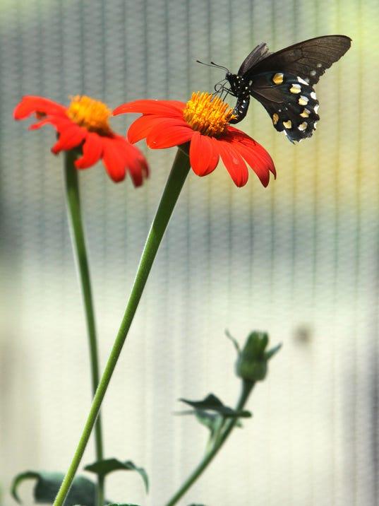 -SNLTab_07-19-2012_Weekend_1_W007~~2012~07~18~IMG_ButterflyVertical.jp_1_1_8.jpg