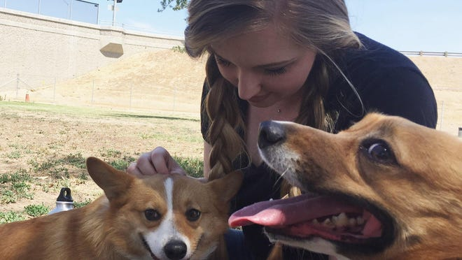 Central Valley Corgi Club organizer Sara Russell cuddles with her corgis.