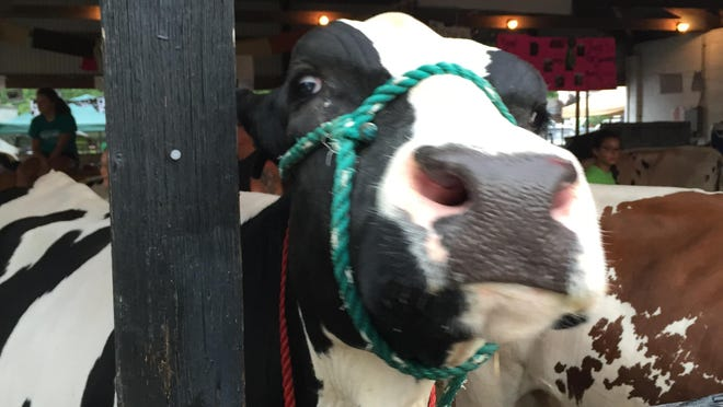Well, hello there from the Clermont County Fair in Owensville - July 24 through July 29.