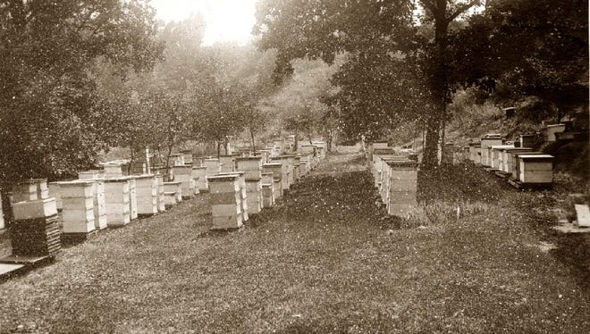 The Lester T. Bishop apiary at Greendale between Kohler and Sheboygan. Bishop was a leader in the industry.