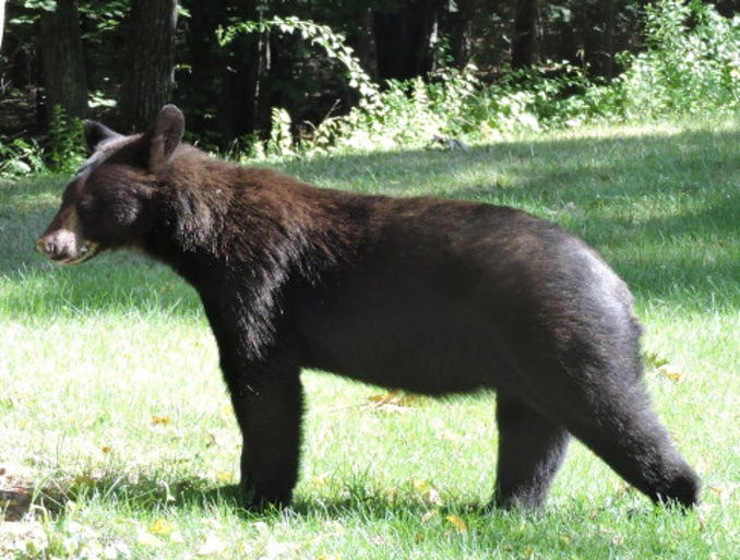Up-close and personal: As bear sightings peak around the nation, Your Take contributors are sharing their best photos of the fearsome (but cuddly?) mammal.
