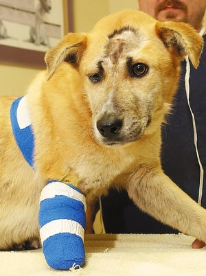 Lucky the dog is seen in this Feb. 23, 2006, photo, the day after he was found in a garbage bin badly injured in Decatur, Ala.