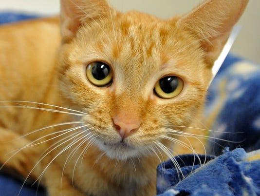 -Quin Cat Adoption3.jpg_20131123.jpg