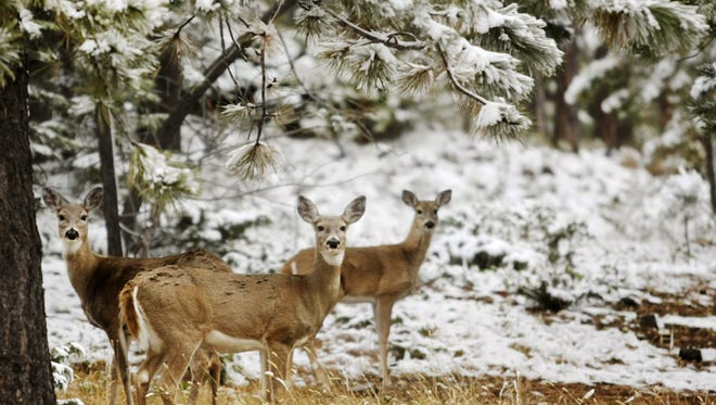 Late rut, wet weather and delayed harvest impact hunting season.