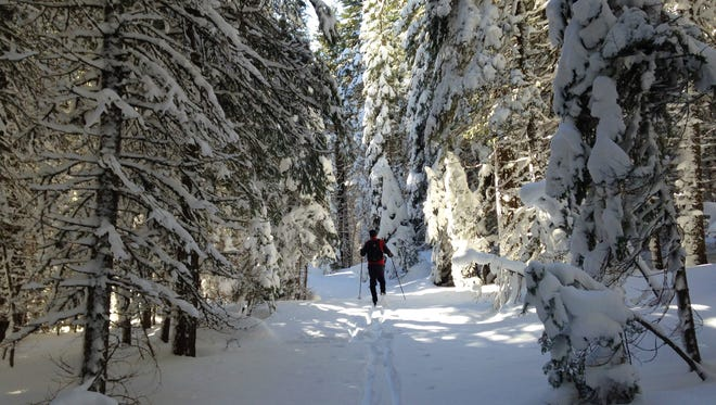 Part of the Nobles Emigrant Trail goes through a dense fir forest in Lassen Volcanic National Park.