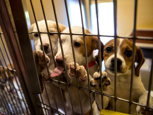 635670418348364944-17new-050815-rescue-62-adoptions