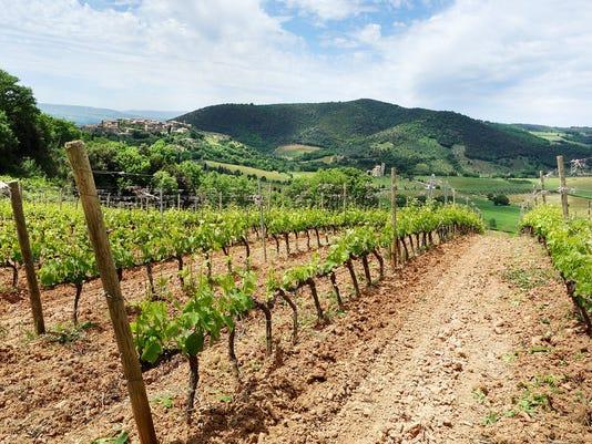 635878792384446629-italy-montalcino-vineyard-111915-RS.jpg
