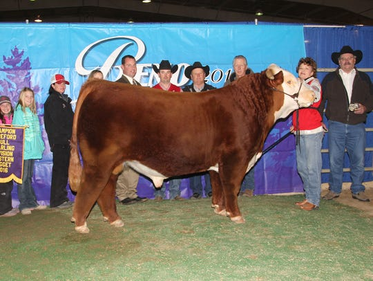 In the horned bull show, grand and champion yearling