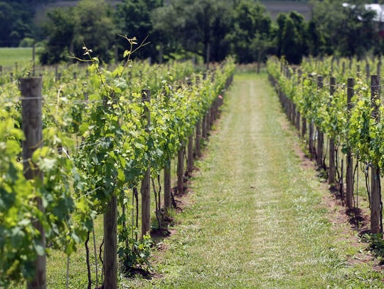 Unionville Vineyards in Ringoes is nestled in the rolling
