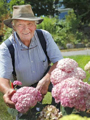 Hydrangea expert, Mal Condon, talks about how to grow bright colored hydrangeas.