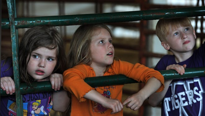 From left, Heather Rutherford, Ryan Gardner and Grayson Starling watch animals during Farm Days.