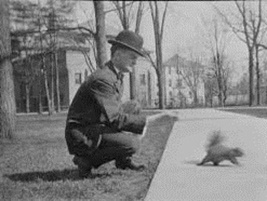 636162927549168795-Squirrel.jpg