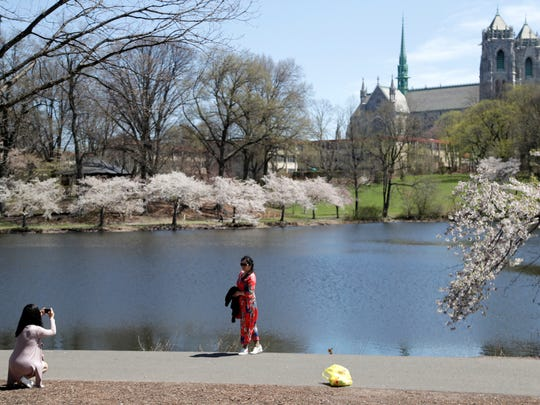 A woman poses for photos near a cherry blossom tree on the bank of Branch Brook Park Lake, Thursday, April 26, 2018, in Newark, N.J.