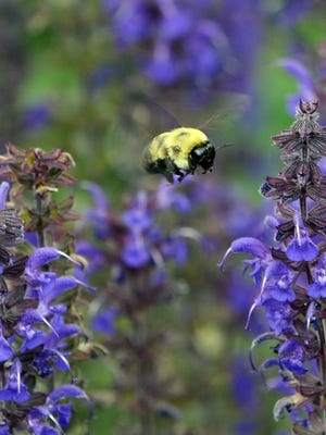 Learn how to photograph the pollinators in your garden with a class Feb. 6 at the Ag & Extension Service Center in Green Bay.