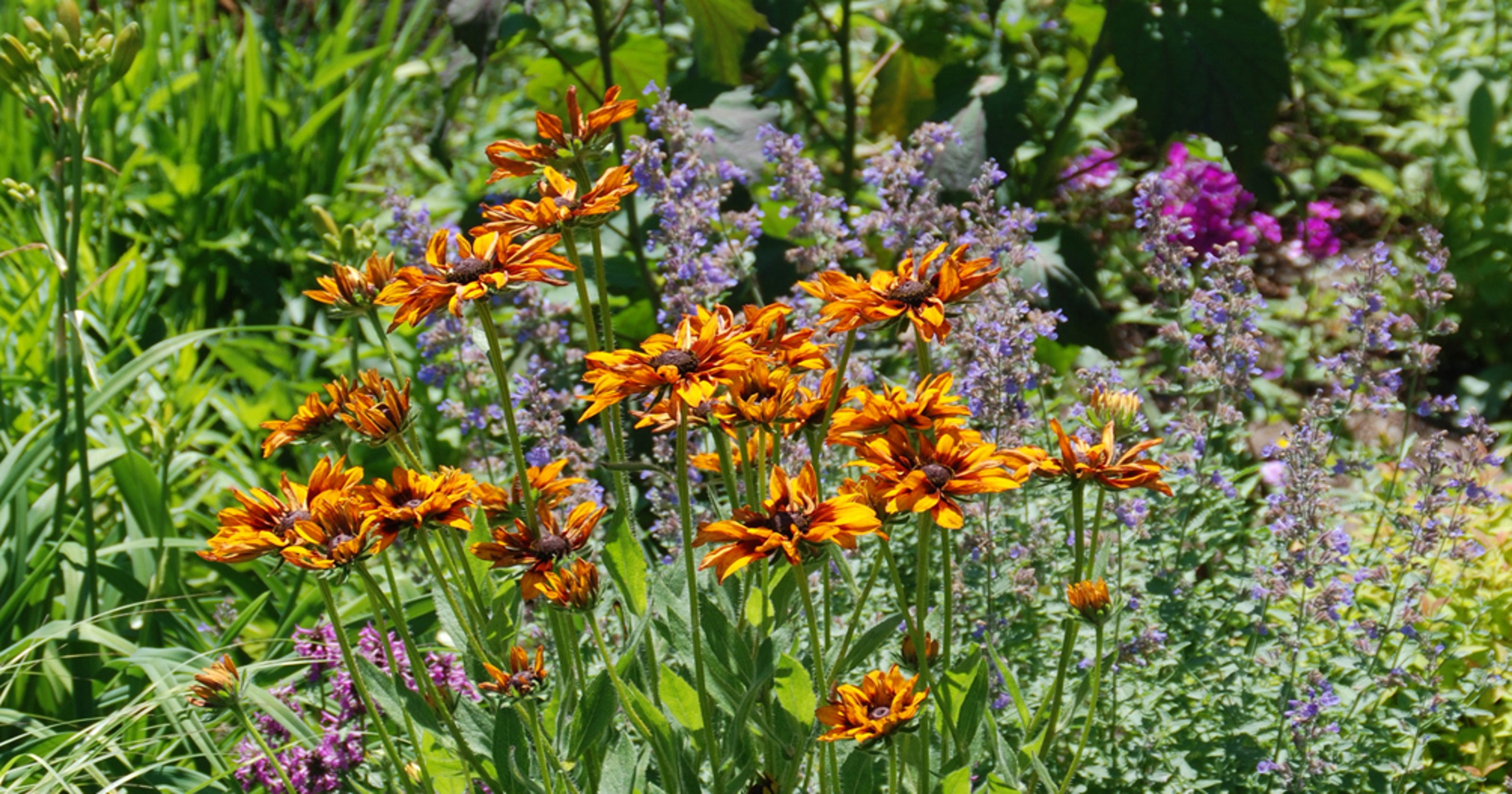Give Perennial Gardens A Boost In Two Easy Steps