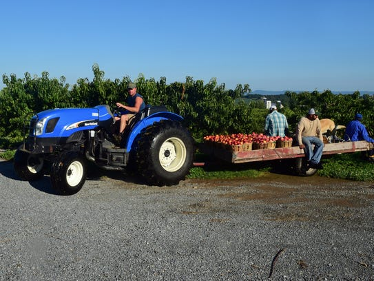 Sean Tracey and fruit pickers take a harvest back to