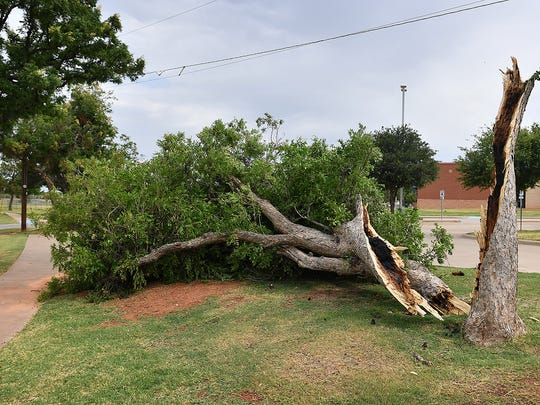 A large tree in Wichita Falls split and fell over after heavy storms. A dry or damaged tree next to a house can cause severe property damage. Homeowners are advised to check and trim trees that are near buildings.