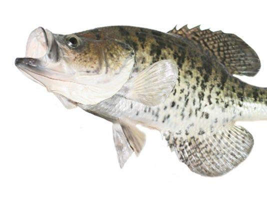 Fish clip art.jpg