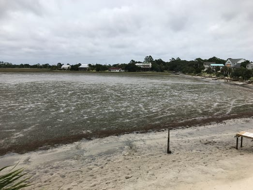 Photos from Live Oak Island and Shell Point at 1:30