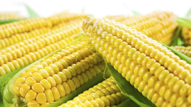Sweet corn needs fertile, moist and well-drained soil, and New Jersey offers the ideal conditions.