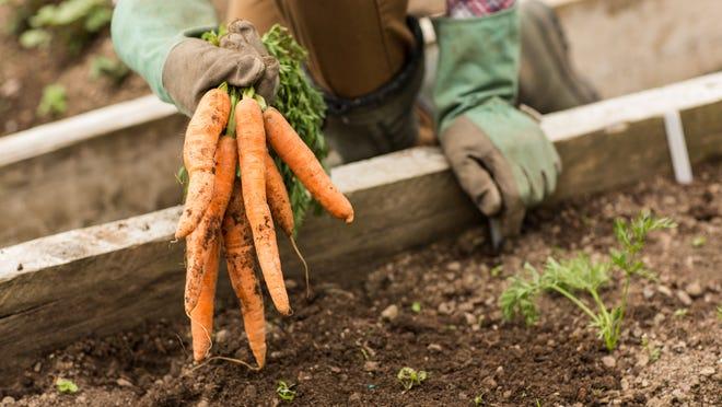 Growing vegetables is similar to how successful business people grow their careers, says columnist Patrick Burke.