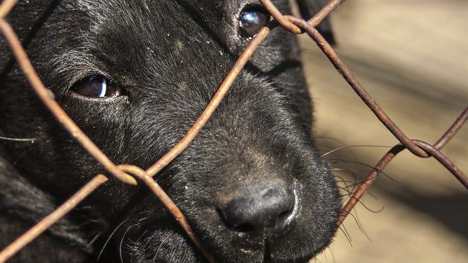 Pound puppy for adoption
