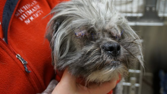 Both the dog's eyes had ruptured, requiring removal