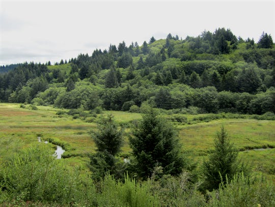 The marsh and Snaggy Hill are seen from the welcome