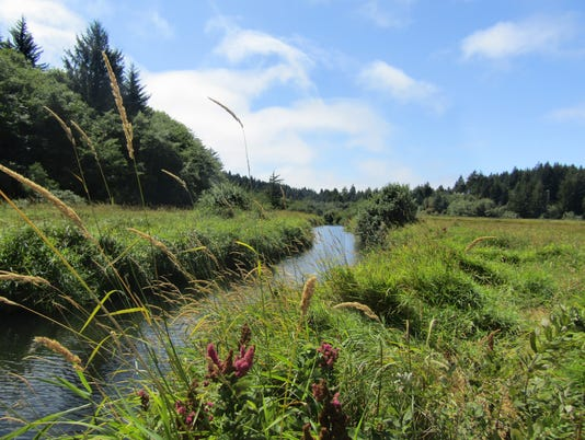 Beaver-Creek-from-marsh-trail-between-Snaggy-Pt-and-Welcome-Ctr