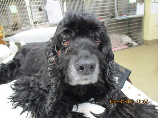 """A severely neglected dog was abandoned in """"deplorable"""""""