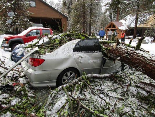 636513609428879663-SEKI-Fallen-Tree-Lodgepole.JPG