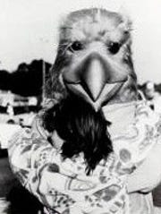 The Golden Eagle in 1985