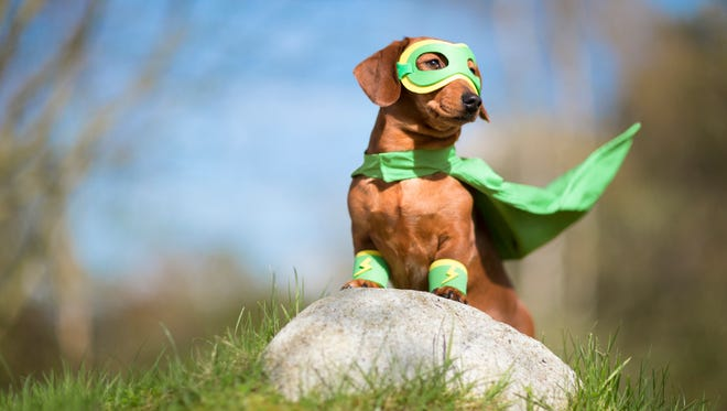 Join SuperPup at the Walk & Wag on Oct. 9 at Cascades Park.