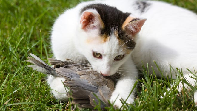 House cats are natural predators that research suggest kills billions of birds annually.