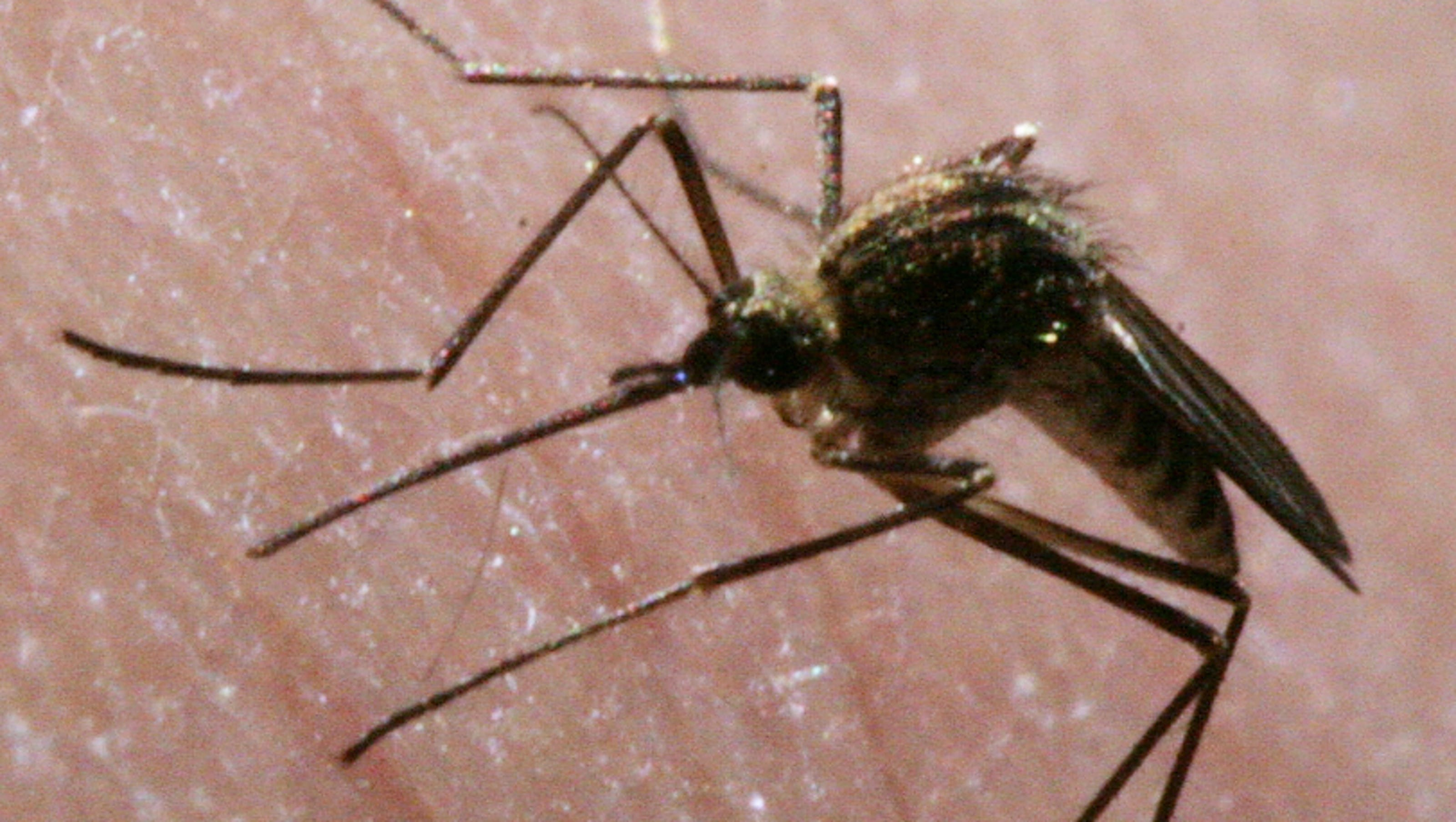 What Is The Worst City For Mosquitoes