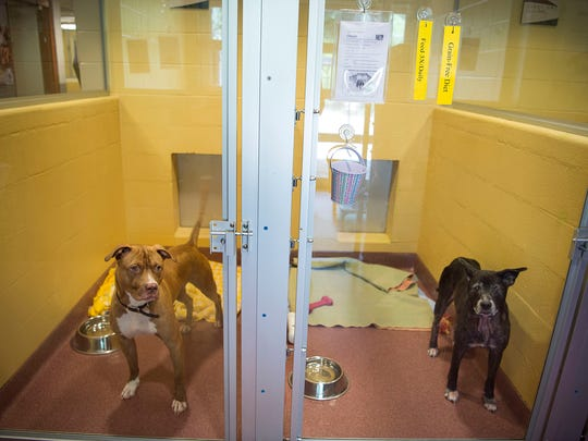 Two dogs look outside their kennels in the adoption area of the Asheville Humane Society.