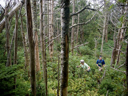 Mount Mitchell: State's first park growing, poised for future