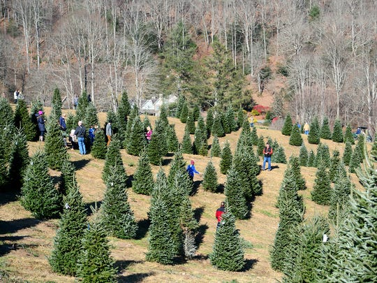 Customers make their way through the rows of trees at Boyd Mountain Christmas Tree Farm on Saturday, Nov. 26, 2016. The farm also provides free hot chocolate and cider, as well as visits from Santa Claus on select days to add to the tree choosing experience.