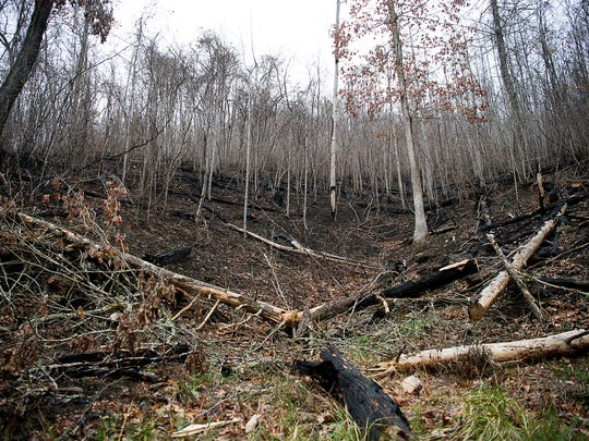 Scorched trees are strewn next to a visible burn line, marking where the wiildfires reached last fall in the Nantahala National Forest.