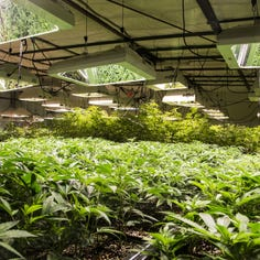 Our View: Get medical marijuana program launched as soon as possible