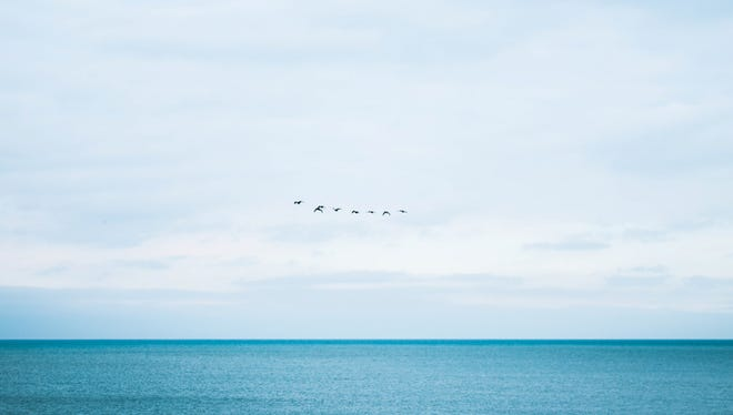 Birds on the horizon over blue waters.