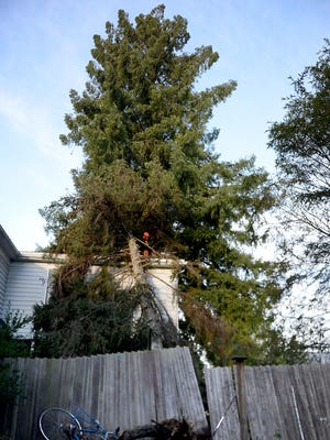A 70 foot spruce fell on a home on the 800 block of Church St. NE in Salem during a wind storm on Thursday, Dec. 11, 2014.