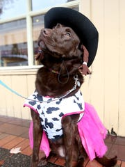 Della, a Chocolate Lab, invites pet owners to join her for a Howl-o-ween costume photo fundraiser for Born Again Pit Bull Rescue at Pet Etc., on Saturday from 11 a.m. - 3 p.m.