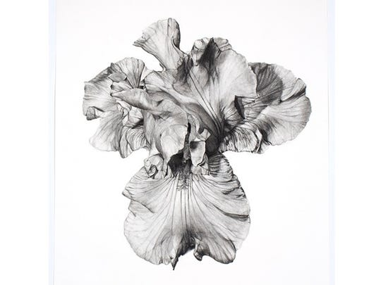 An iris, rendered in charcoal by the artist Tara Shukla.