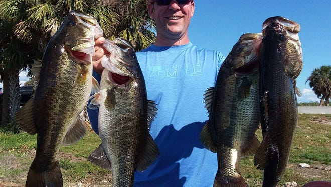 Mike Nichols of Canada caught and released these bass while fishing with Capt. Nate Shellen of Okeechobeebassfishing.com.