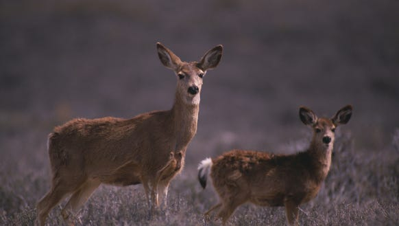 DEC is offering hunters a chance to obtain more doe