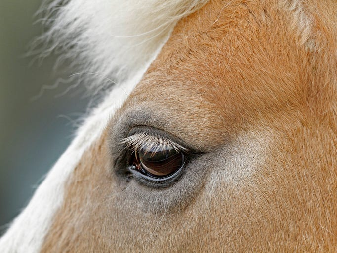 Long eyelashes frame a horse's eyes at Strides to Success in Plainfield,  Monday, April 15, 2013.