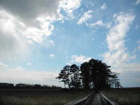 A marsh boardwalk leads through piney woods to an observation platform at the Eastern Neck National Wildlife Refuge in Kent County, Maryland. The refuge is part of the U.S. Fish and Wildlife Service's Chesapeake Marshlands refuge complex, one of the biggest pesticide users nationwide in the refuge system. Submitted image