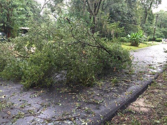 A tree blocks Chocksacka Nene in Indian Head Acres.